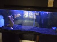 100 Gallon Aquarium with Filter and Stand