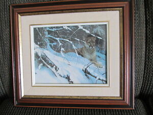 Two Pictures One of A Cougar & One of a Fox  -$12.00 each