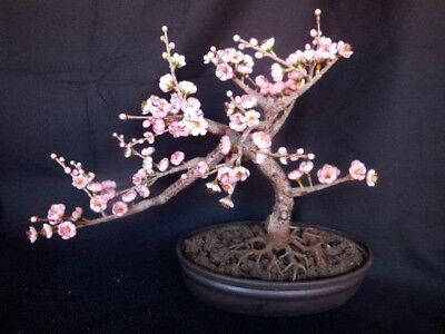 Bonsai Flowering Cherry Tree Artifical High End Home Decor Floral Decor 17