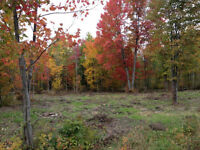 16 Acres of Land For Sale