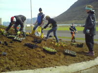 Conservation project at the Reykjavik Botanical Garden - Iceland