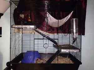 2 PET RATS & ACCESSORIES --LOWER PRICE
