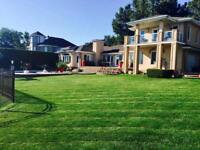 Tonte de gazon / Lawn care / 819-230-1595