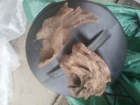 Drift wood for fish tank or reptiles