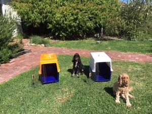 Dog Carriers/Crates x2 Medium Rossmoyne Canning Area Preview