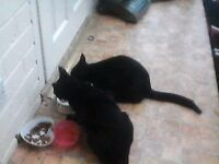 2 lovely cats for free free