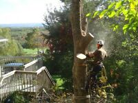 GROUND TO CROWN TREE REMOVAL - FULLY INSURED - FREE ESTIMATES