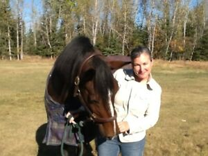 Horse Lease Wanted