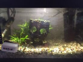 30l fish tank plus accessories and fishes