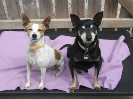 Bonded Pair of DOGS - ADOPT or FOSTER NOW Ingleside Warringah Area Preview