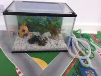 Starter fish tank 23 L with background, ornaments, 2 nets and syphon for cleaning
