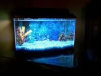 Fish Tank Starater Kit