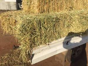Oaten Hay small square bales Katanning Pallinup Area Preview