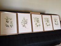 5 x Large Framed Olive Art Prints