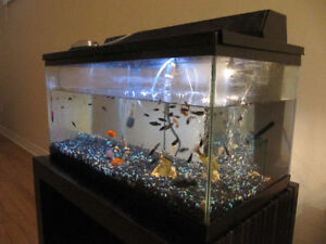 16 Gallon fish tank with +40 fish including heater, filter, pump