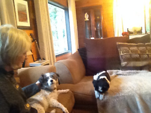 Peace of mind House/Pet sitting while you are away