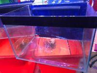 Fish Tanks Aquariums for sale Good Condition