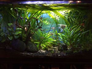 29 gallon aquarium for sale - incl stand, cover and light SALE