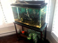 30 Gallon Fish Tank and Stand for Sale
