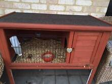 Sweet Guinea Pig to a good home Stirling Stirling Area Preview
