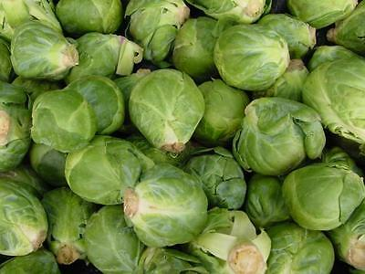 500 Long Island Improved Brussel Sprouts 2018 Non Gmo Heirloom Vegetable Seeds