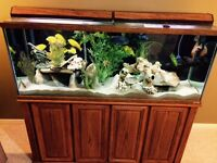 AQUARIUM - 110Gallons  PACKAGE WITH SOLID WOOD STAND