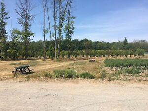 18 ACRES.TOWN OF LINCOLN / BEAMSVILLE. WINERY & TREE NURSERY.