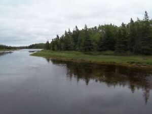 Woodlot on river with cabin
