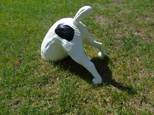 statue d un chien t te dans le sol d co jardin nouveau ebay. Black Bedroom Furniture Sets. Home Design Ideas