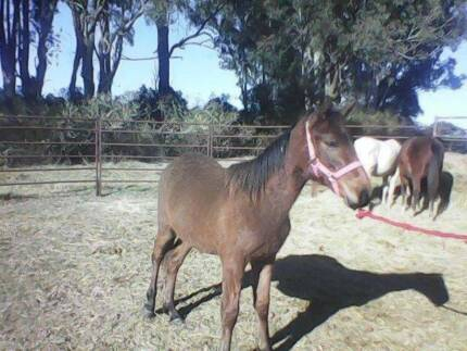 HORSE STARTING & RE EDUCATION & RE HOMING SERVICE