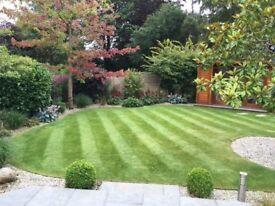 Mature Gardener for all your Garden Needs