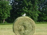 2015 1st Cut Dry hay