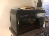 Perfect condition fish tank aquarium