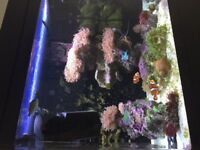 RED SEA MAX 130D FOR SALE LED LIGHTS UPGRADED SKIMMER AND RACK MANY EXTRAS