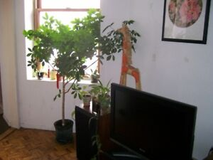 Big furnished room in 5 1/2 near Berri-UQAM available July 1