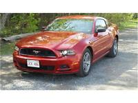 2013 Ford Mustang V6 (Winter Price Drop - Free Storage)