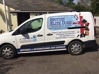 Dog (Pet) Transportation Business