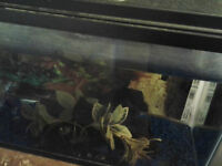 10 gallon fish tank for sell