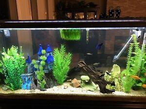 60 Gallon Aquarium with fish tank accessories