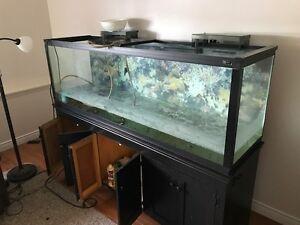 Huge Aquarium with Canopy