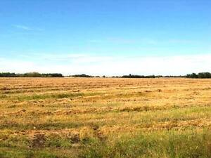 116 Acres Near Camrose Edmonton Edmonton Area image 3
