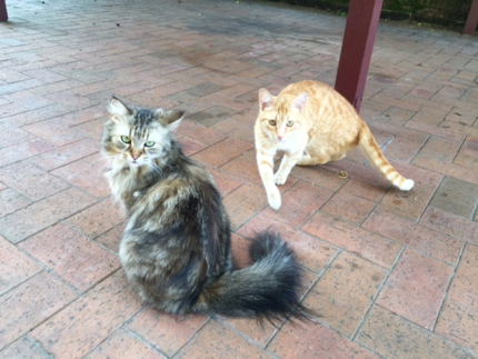 Male and Female Cats - Lance and Peanut
