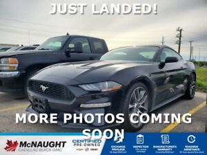 2019 Ford Mustang GT RWD   6 Speed Manual   460 HP