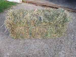 Excellent Quality Square Hay Bales