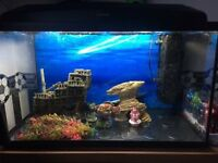 100 LITRE FISH TANK FULL SET UP!!