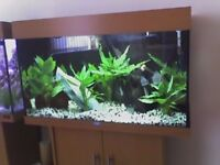juwel rio 125 litre fish tank and stand comes with local free delivery