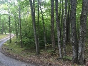 Nicely Treed Lot Near Sharbot Lake