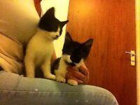 Two kittens found in Somerstown