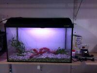 Fish Tank (12W x 11.5 L x 13.5 H)