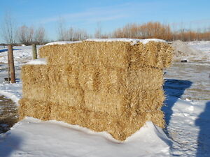 SQUARE wheat straw bales $4.00